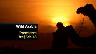 WILD ARABIA!