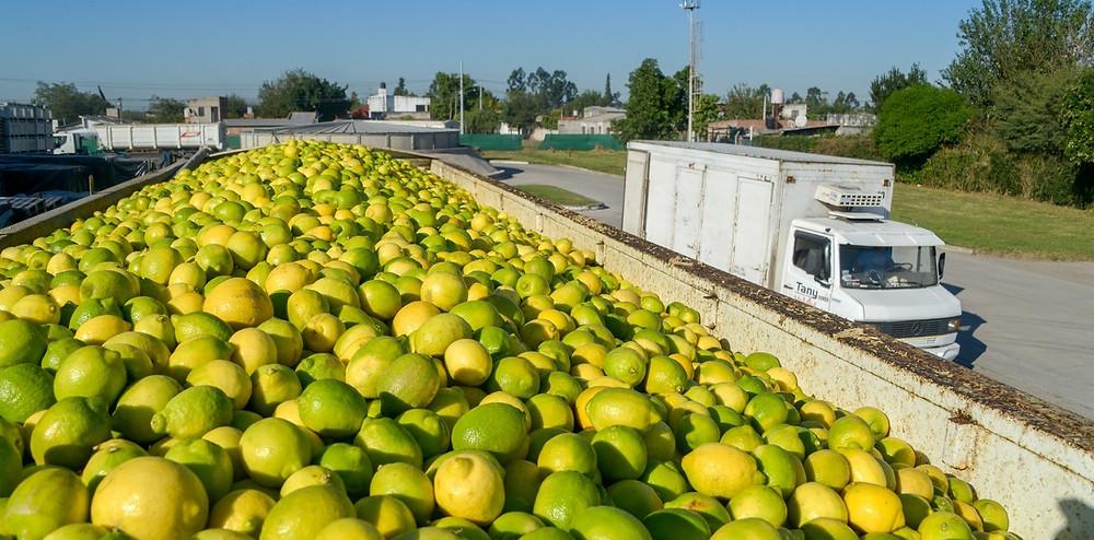limon limones argentinos argentina china exportacion importacion mercado comercio ecommerce