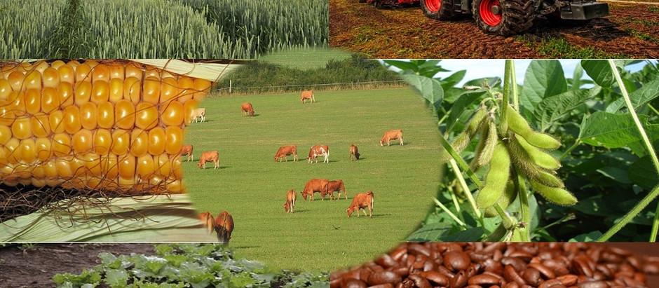 Aumentan las exportaciones del agronegocio brasileño