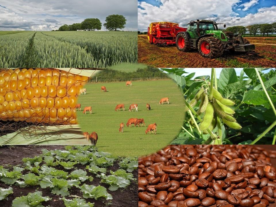 agronegocio brasil expotaciones exportacion importacion compra venta china avo avocommerce