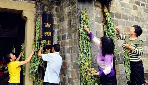 atemisia calamus plantas medicina salud buena fortuna china festival tradicion colgar bote dragon