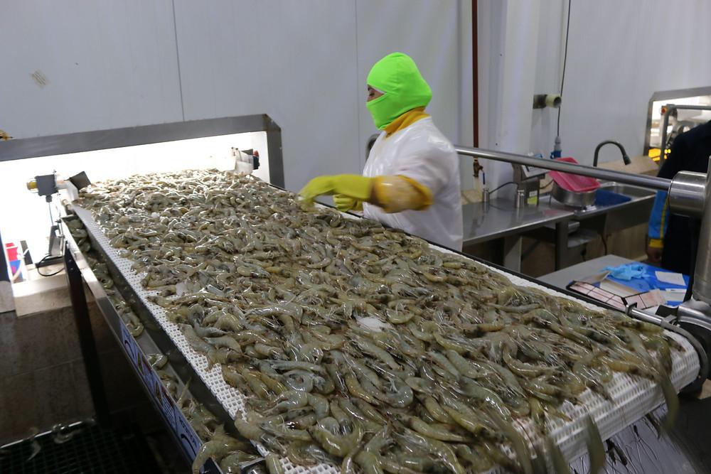 camaron ecuatoriano mercado camaronero exportacion exportaciones china covid19 covid coronavirus