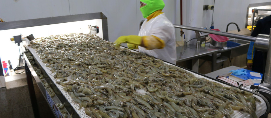 China readmite las exportaciones de camarón ecuatoriano