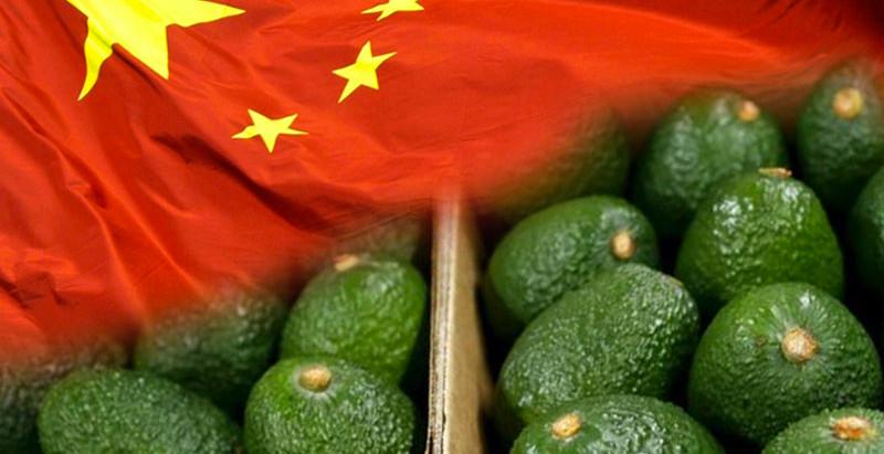 ¿Por qué el aguacate es un éxito en el mercado Chino?