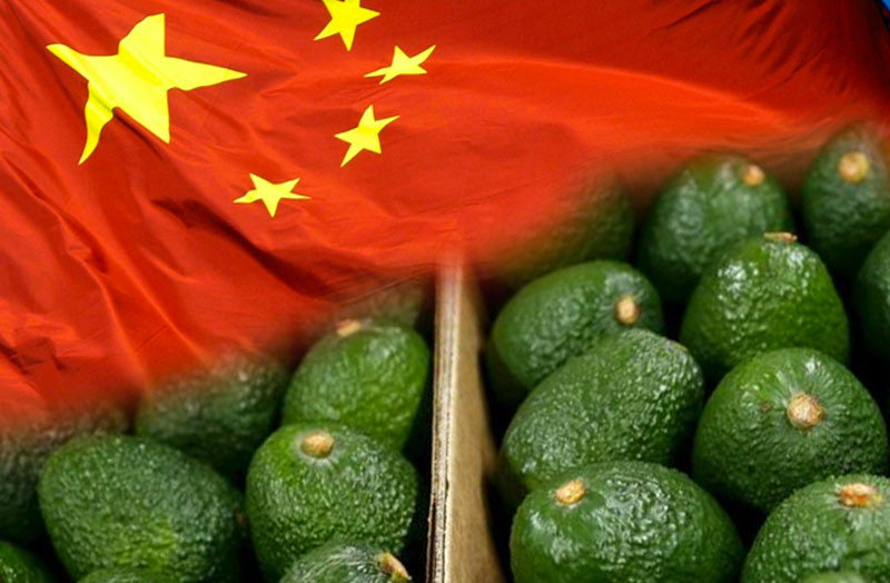 aguacate china importacion latinoamerica productos popular mercado comercio electronico chile peru mexico
