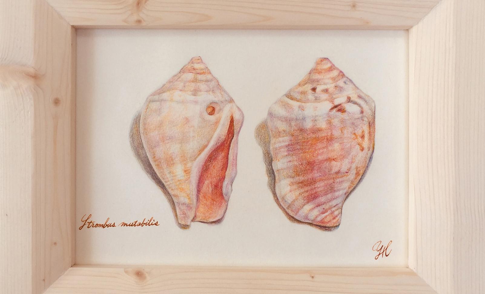 shells 〜Okinawa〜 (H.ヨウコ) TARTAROS JAPAN
