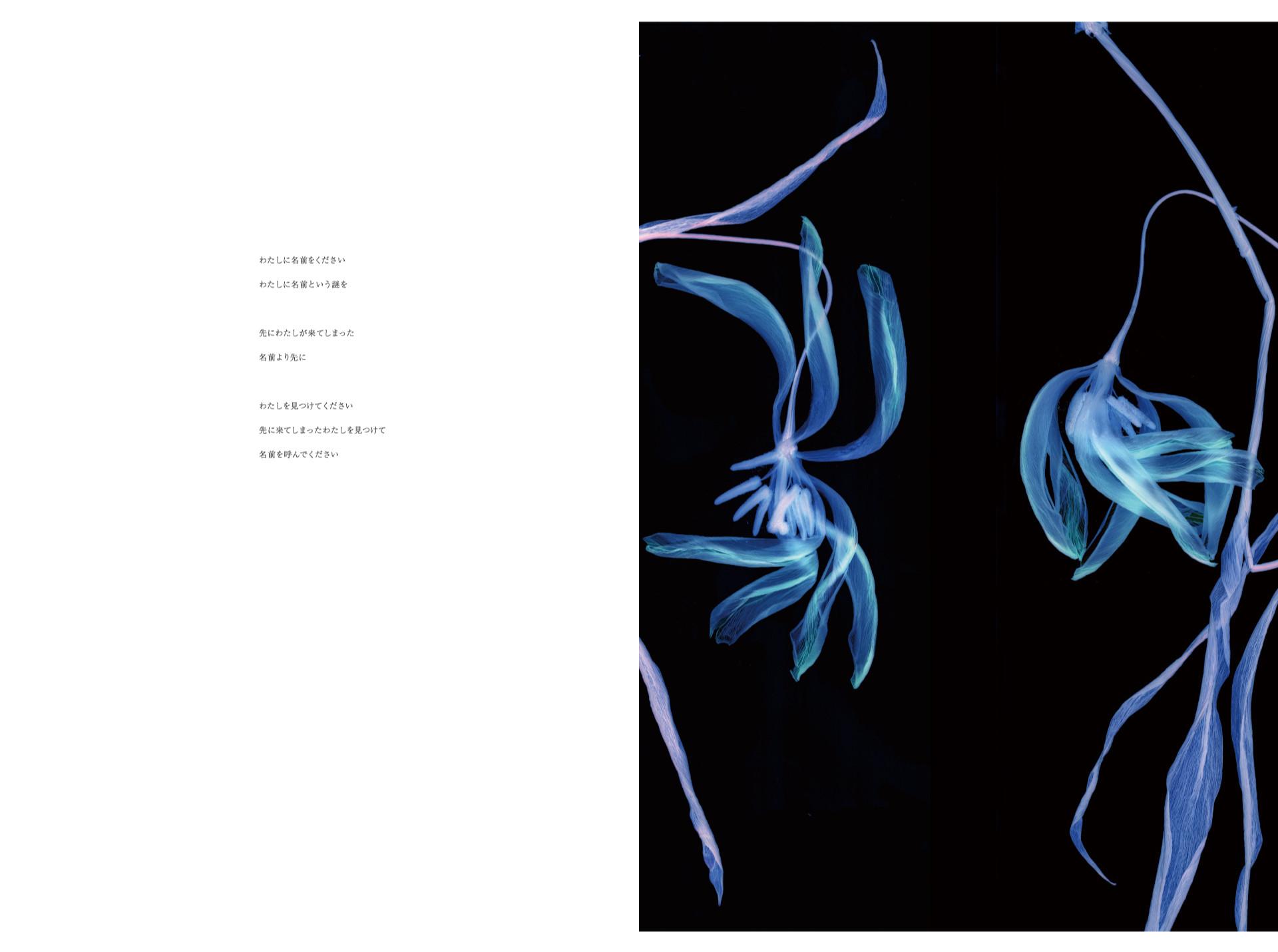 わたしに名前をください わたしに名前という謎をかけて   先にわたしが来てしまった 名前より先に   わたしを見つけてください 先に来てしまったわたしを見つけて 名前を呼んでください       Poetry : Akiko Niimi         Tulip Ⓒ 2016 Yoichiro Nishimura