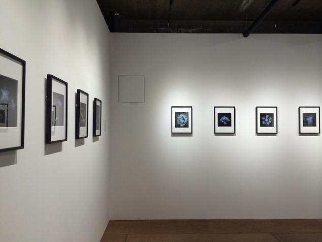 Hydrangea-Exhibition view