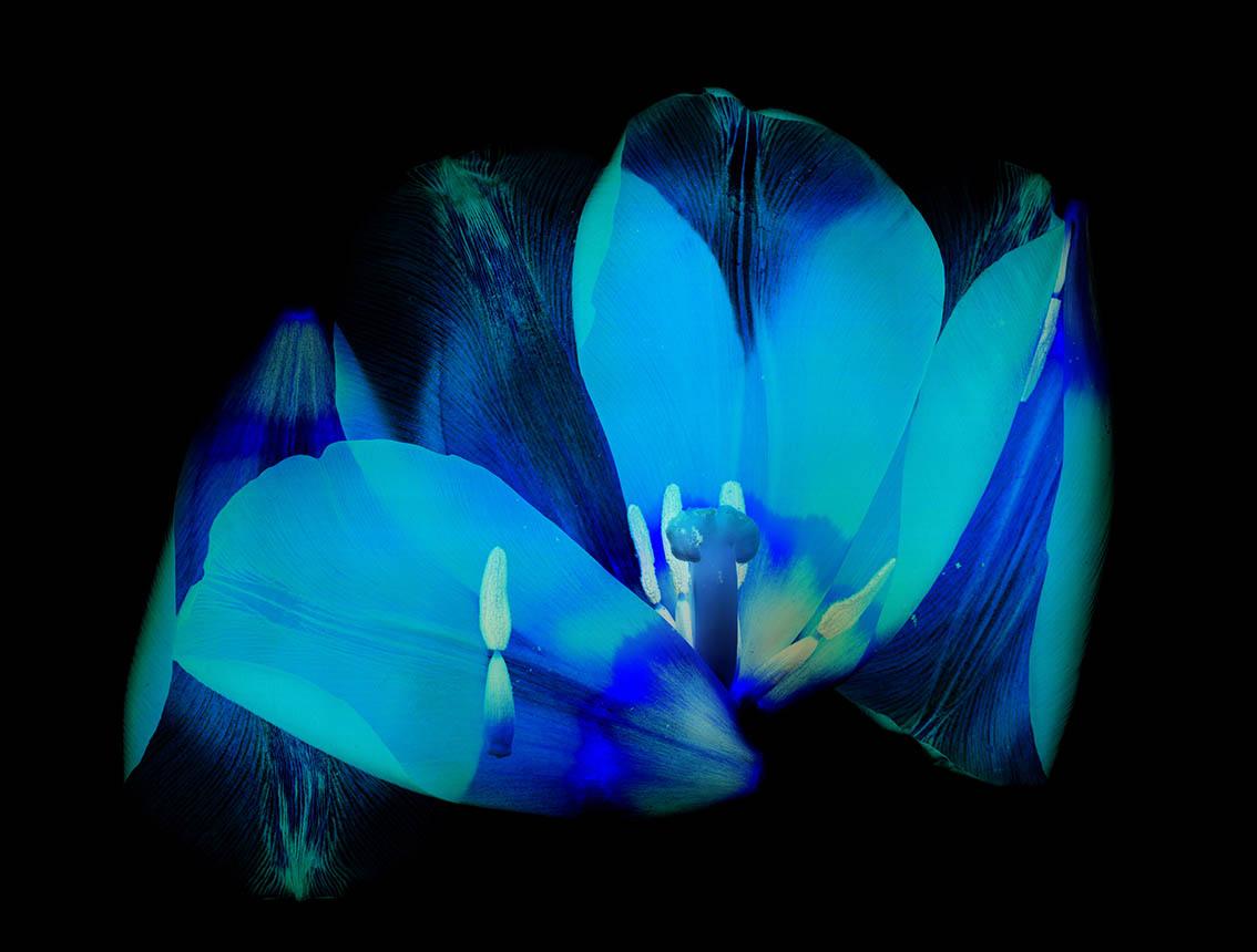 Nishimura Yoichiro - Blue Flower