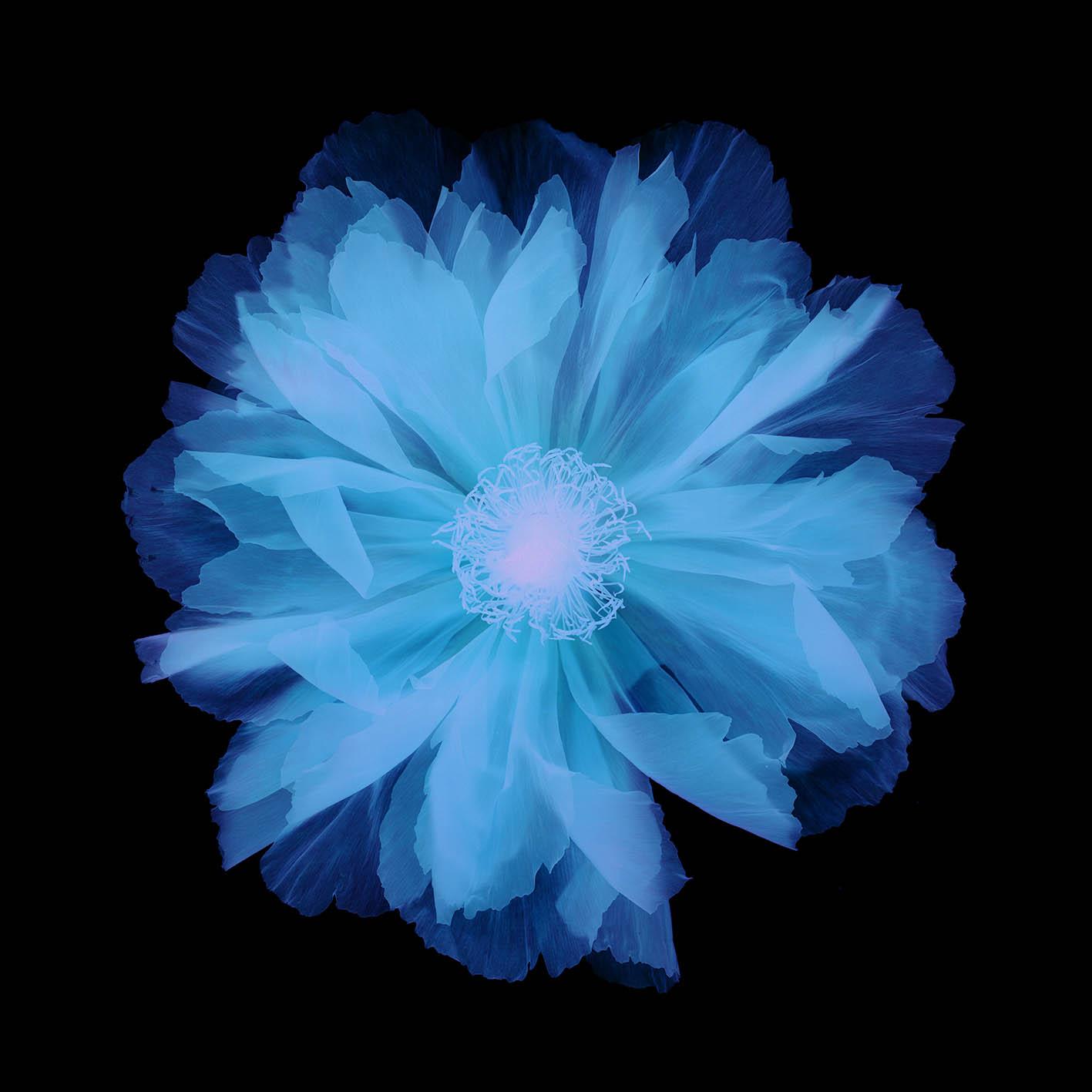西村陽一郎|Blue Flower