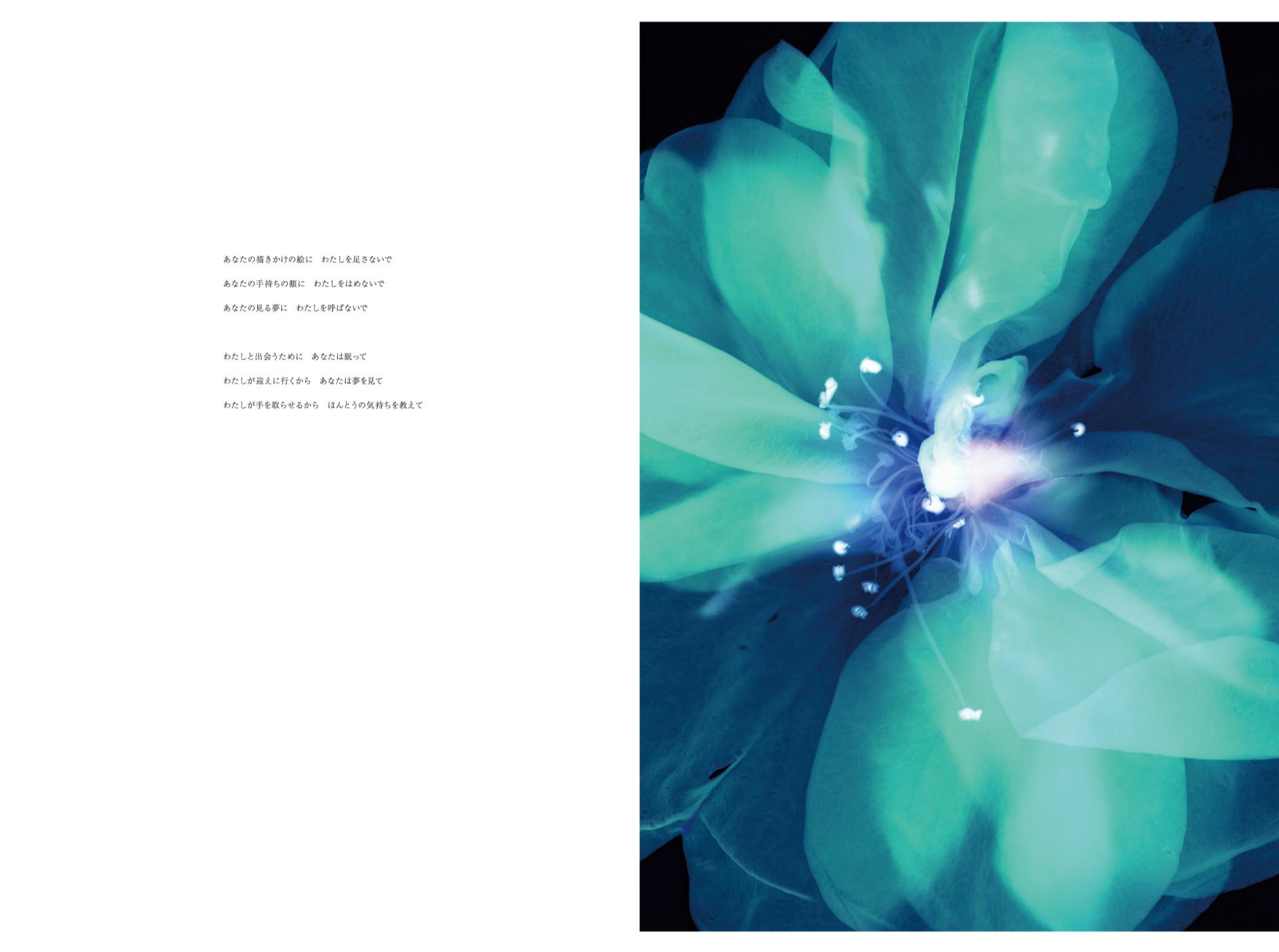 あなたの描きかけの絵に わたしを足さないで あなたの手持ちの額に わたしをはめないで あなたの見る夢に わたしを呼ばないで   わたしと出会うために あなたは眠って わたしが迎えに行くから あなたは夢を見て わたしが手を取らせるから ほんとうの気持ちを教えて      Poetry : Akiko Niimi       Rose Ⓒ 2016 Yoichiro Nishimura