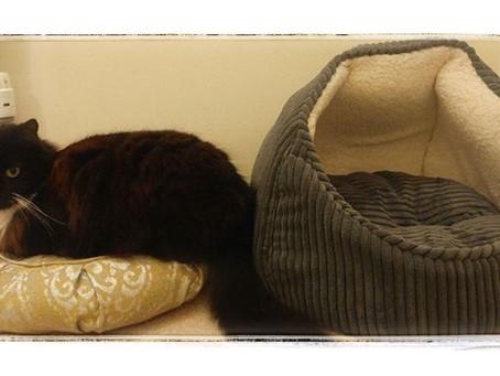 A recent review, Cat on a Zafu Meditation Cushion