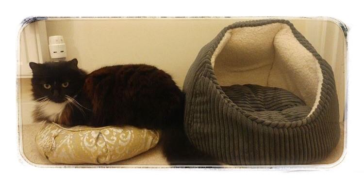 Bonnie the Cat on a Zafu Meditation Cushion