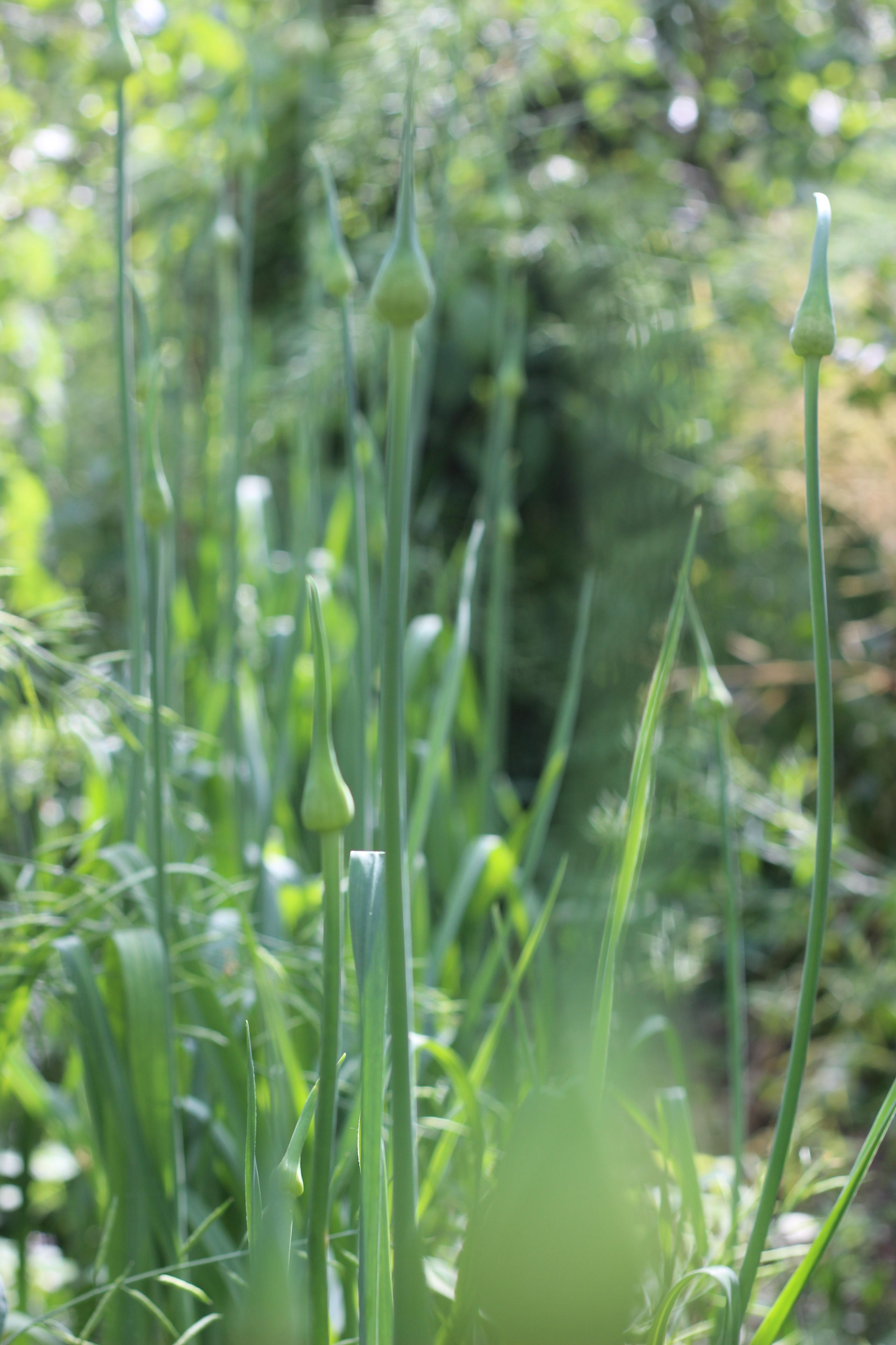 Jardin foret