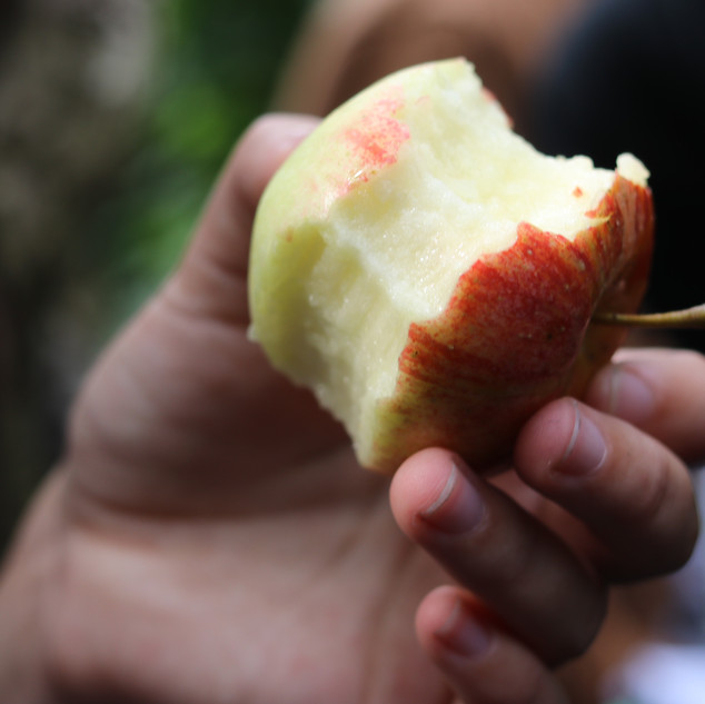 le goût des pommes