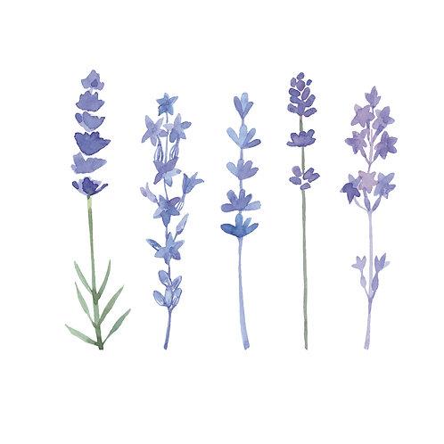 Lavender in row | grafikás női fehér pamutpóló
