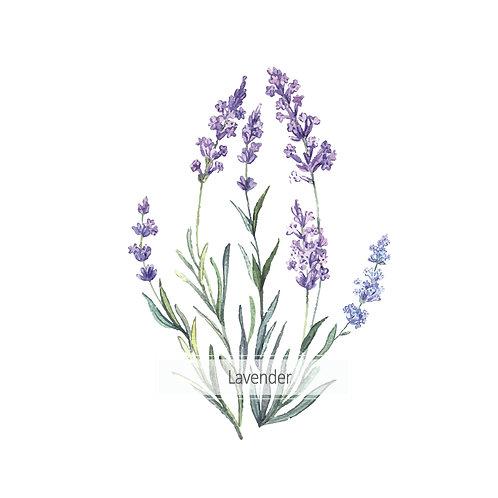 Lavender bunch | grafikás női fehér pamutpóló