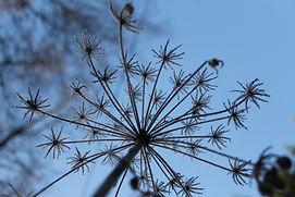 Blomst i silhuett