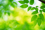 Eco food link