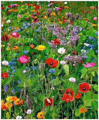 L'Amicale Laïque organise une vente de plants et de fleurs