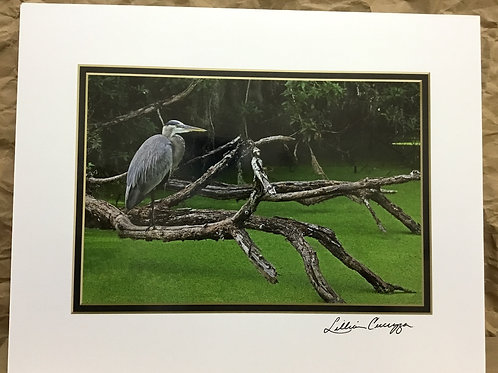 """Great Blue Heron """"Branching Out""""photograph by artist Lillian Cucuzza"""