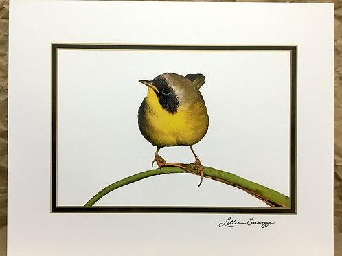 "Common Yellowthroat Warbler ""Sunrise Beauty""photograph by artist Lillian Cucuzza"