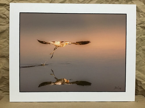 """Avocet into the Sunset"" photograph by artist Lillian Cucuzza"