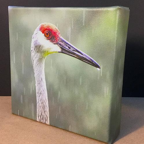 Sandhill Crane bird photo canvas print by artist Isaac Jeter