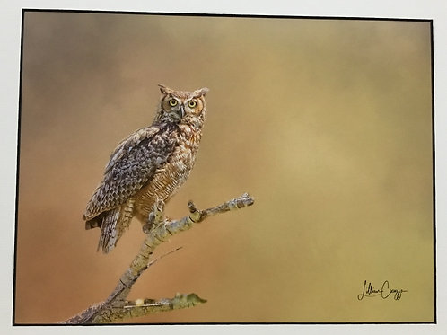 """""""Great Horned Owl"""" photograph by artist Lillian Cucuzza"""