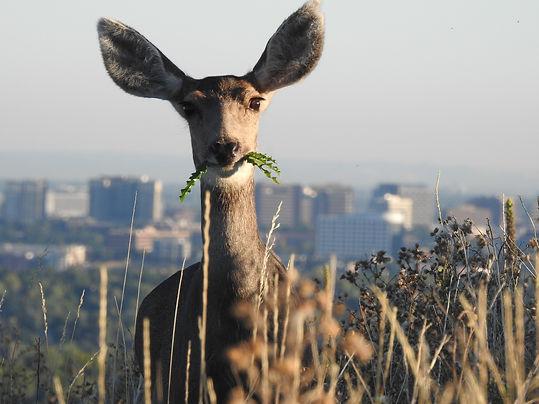 deer-3000156_1920.jpg