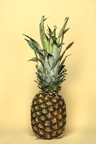 Pineapple Monster