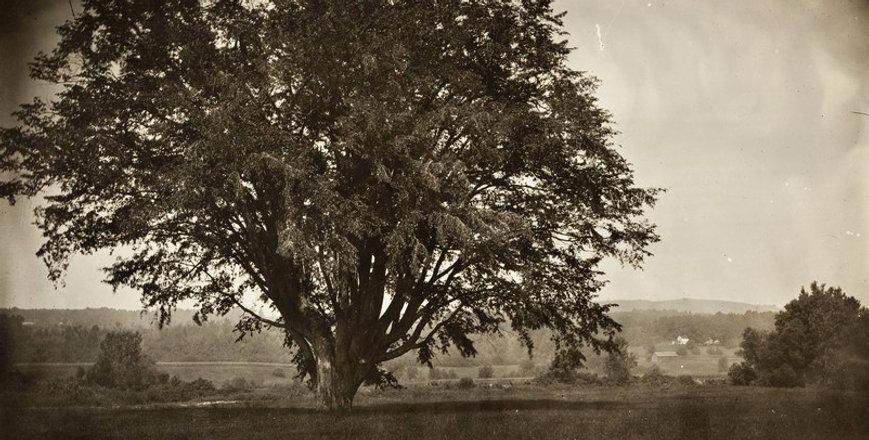 elm tree south us 77avvv.jpg