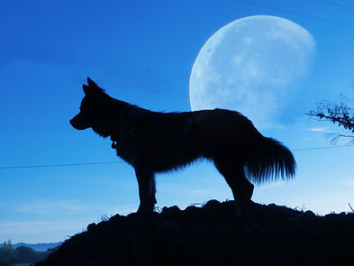 vegas-moon.jpg