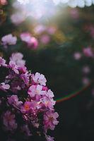 pexels-maria-orlova-4913453.jpg