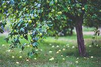 pexels-kaboompics-com-6035.jpg