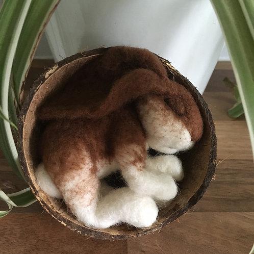 Sleeping Baby Bunny Brown in coconut shell