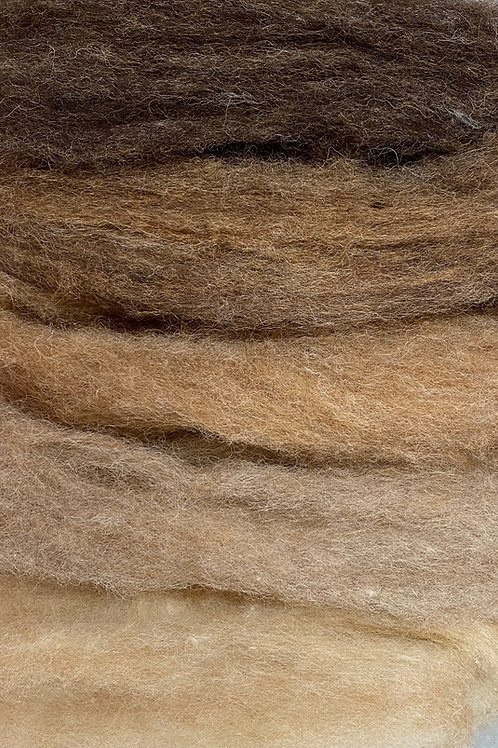 5 Shades of Brown 50g Corriedale Slivers