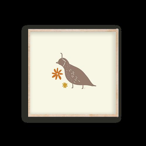 desert things - quail
