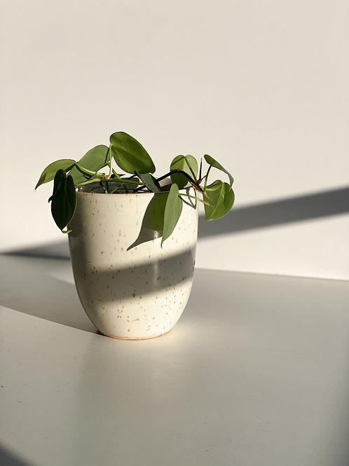 ceramic speckled plant pot