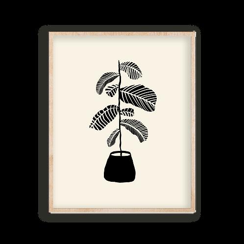 pattern plant