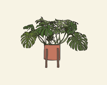 monstera-06.png