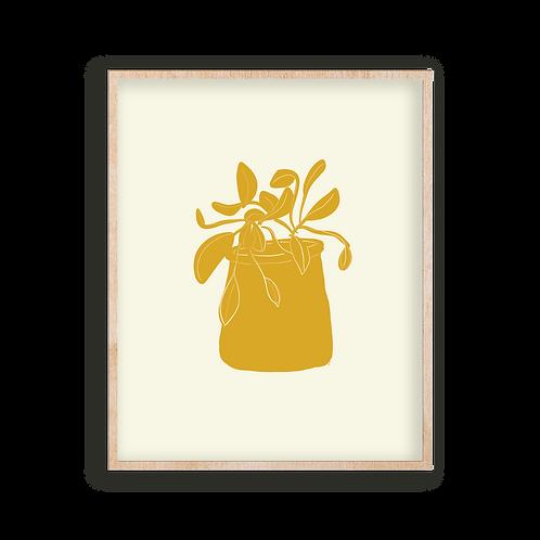 yellow pothos