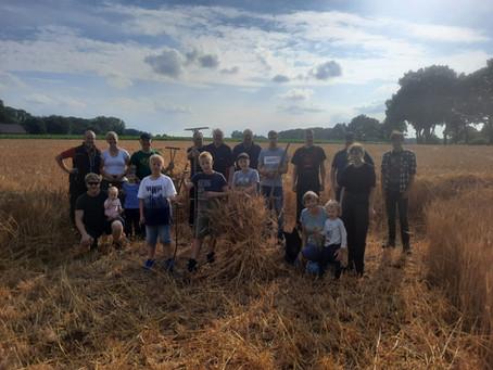Getreide holen für die Erntekrone