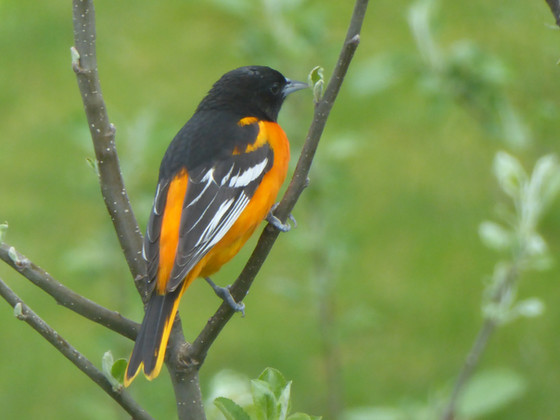 Birding in the Spring Creek Watershed