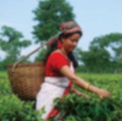adult-agriculture-blue-sky-2835599.jpg