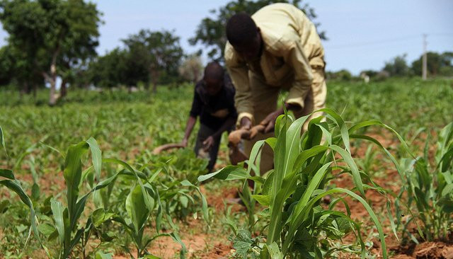 Scaling Agricultural Best Practices to 800,000 Rural Farmers in Northern Nigeria