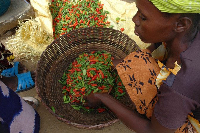 The Pivot to Yes: Positive Youth Development and Our Agriculture Program in Liberia