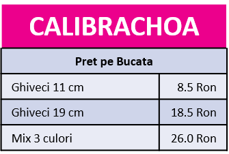 Calibrachoa.png