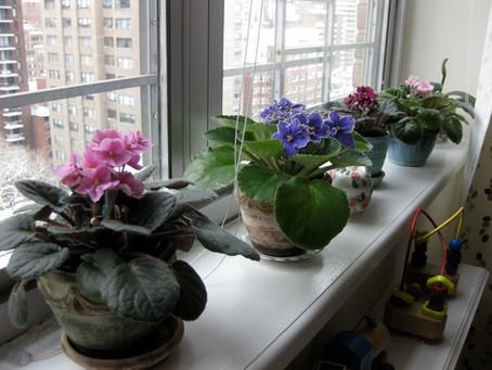 Flori de Apartament - usor de ingrijit! Sfaturi, poze si denumiri!