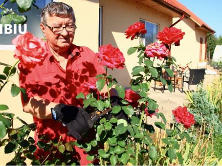 Ingrijirea Trandafirilor – de gradina, in ghiveci sau cataratori..